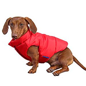 best dog rain coat