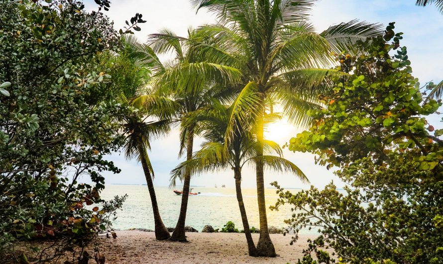 Amazing List of Florida Beaches & State Parks That You Should Explore