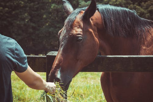 Horse Feeding Basic Guidelines & Nutrition Schedule