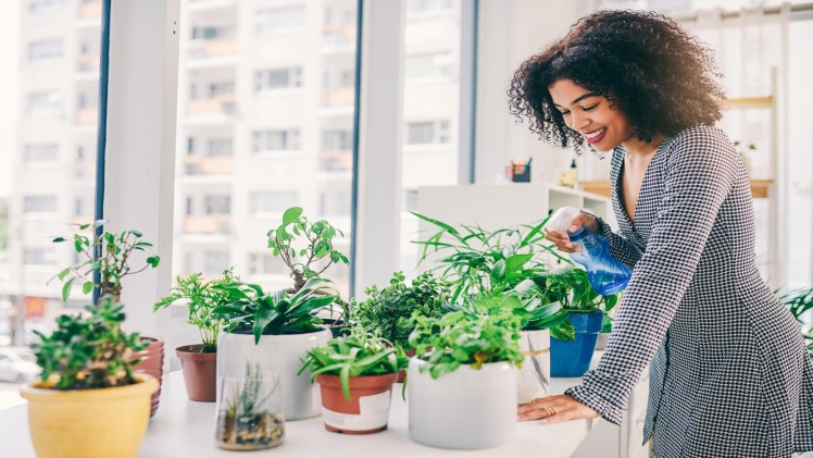 How Can You perform Indoor Gardening and What Is Its Significance?