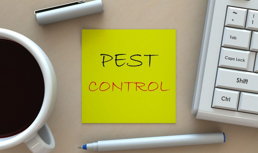 Top 5 Factors to Consider When Hiring Pest Control Services