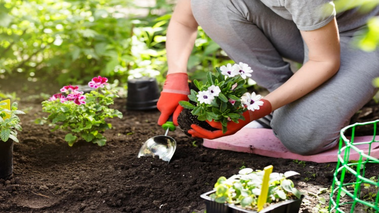 3 First Time Gardening Tips for a Beautiful Yard