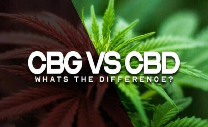 CBD vs. CBG Skin Care: What is the Difference?